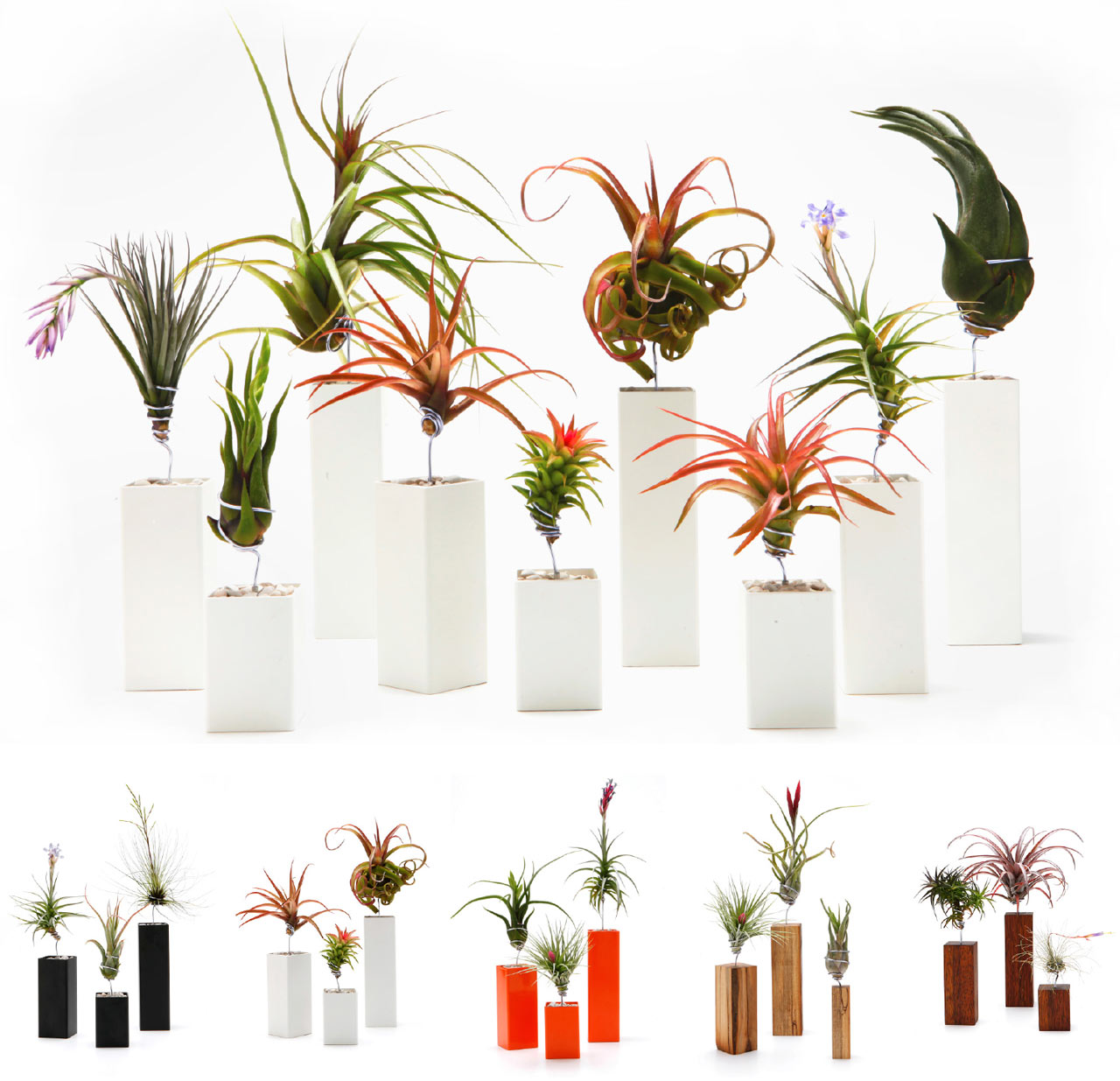 airplantman-airplant-vessel-vase