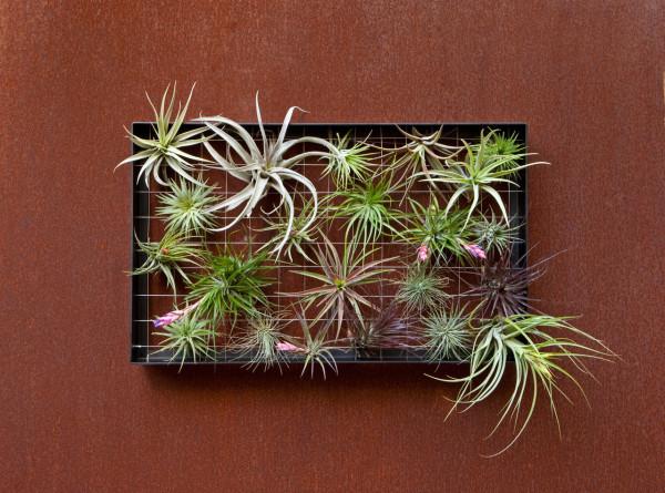 airplantman-planter-outdoor-decor-plants