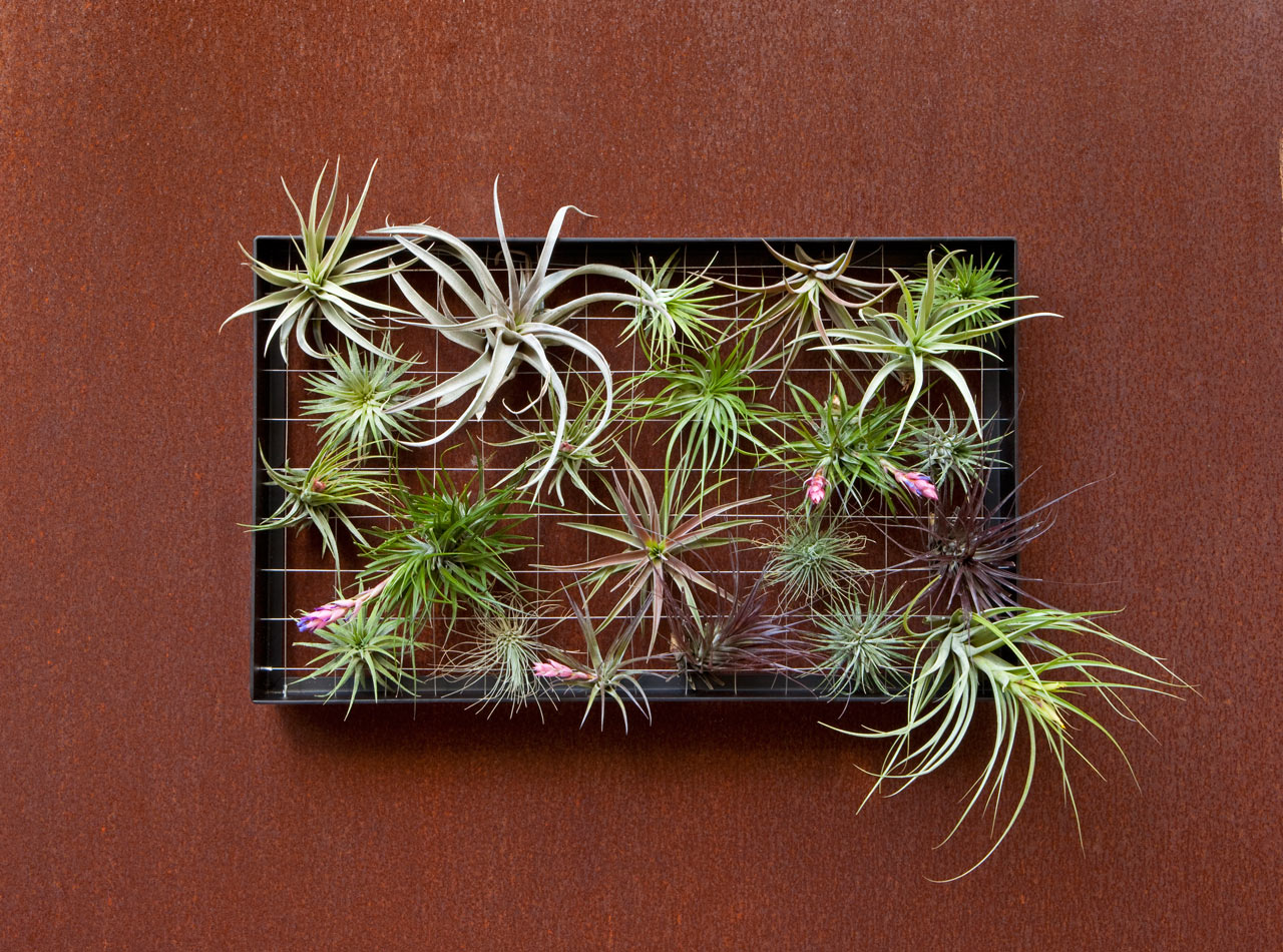 airplantman-planter-outdoor-decor-plants