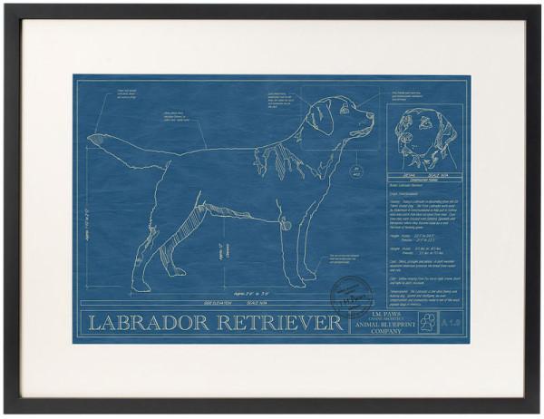 dog-breed-blueprints