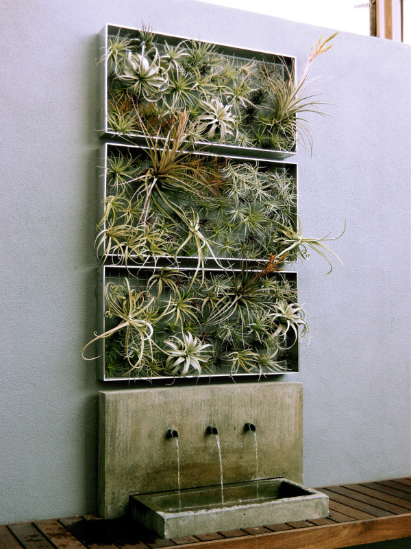 Ideal home decor ideas plants air plant airplantman