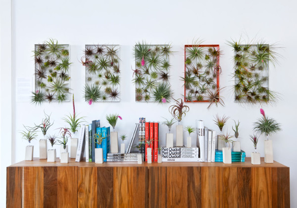 Living wall art vertical garden frames by airplantman for Air plant decoration