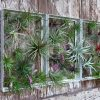 outdoor-wall-decor-ideas-plants-airplantman
