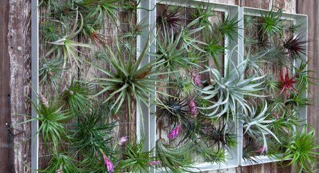 Living Wall Art Vertical Garden Frames by Airplantman