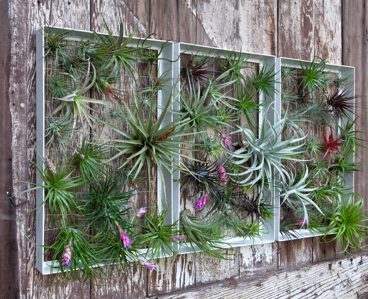Living Wall Art Vertical Garden Frames by Airplantman ... & Living Wall Art Vertical Garden Frames by Airplantman - Design Milk