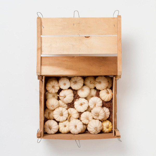 white-pumpkins-in-crate