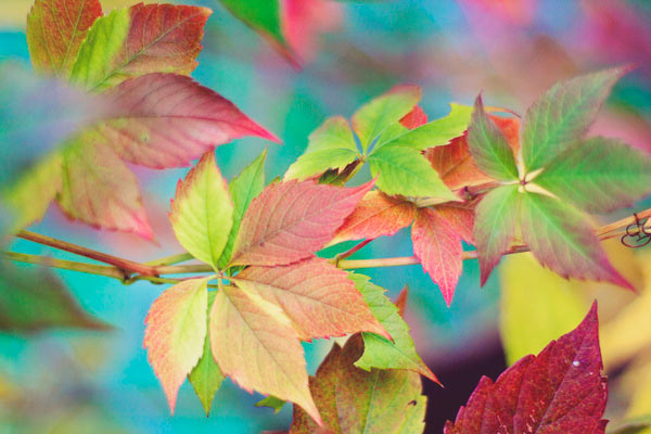 Fresh From The Dairy: Fall Colors