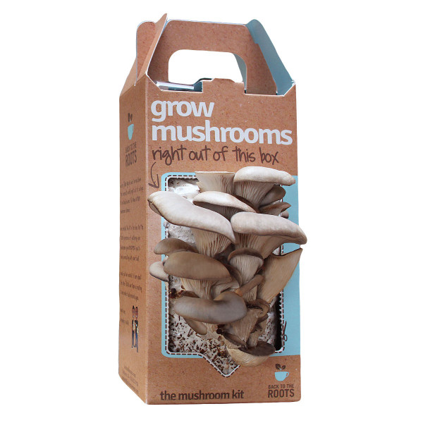 grow-mushrooms-kit