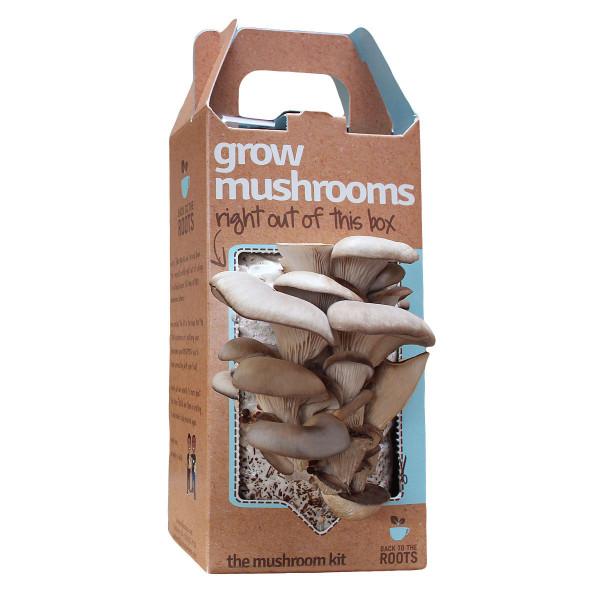 grow-mushrooms-kit