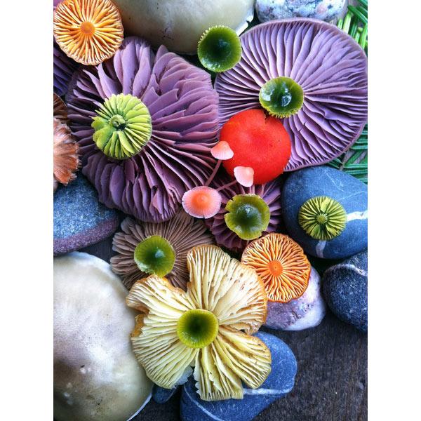 mushroom-medley-photograph-jill-bliss