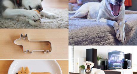Dog Milk: Best of January 2014