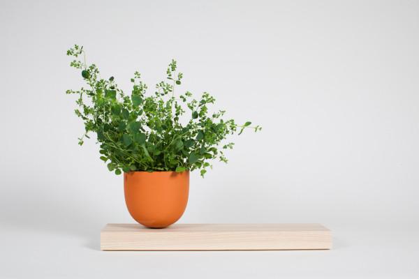 Hallgeir-Homstvedt-11-Grow-Pot