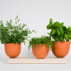 Hallgeir-Homstvedt-12-Grow-Pot