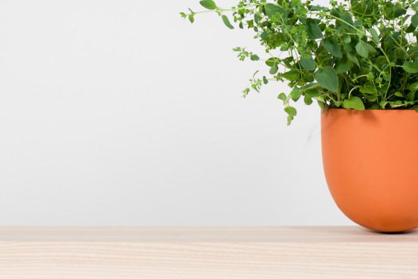 Hallgeir-Homstvedt-13-Grow-Pot