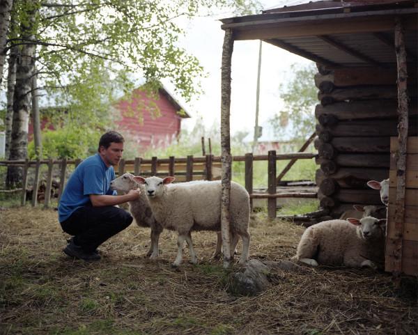 F5-Harri-Koskinen-1-lambs
