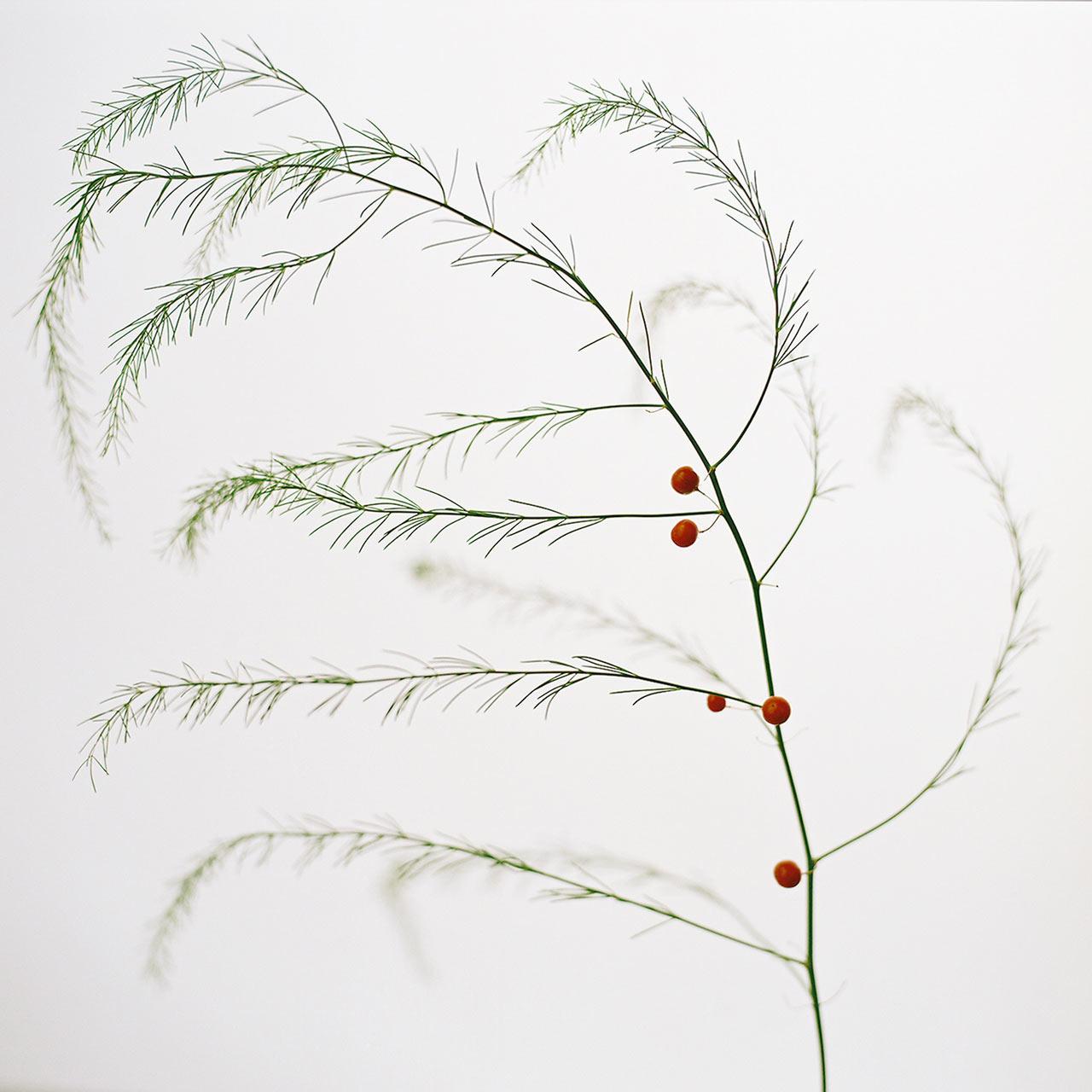 Decon-Designtex-10-9_Wild-Asparagus_S.White