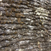 foss-bark-tiles-2
