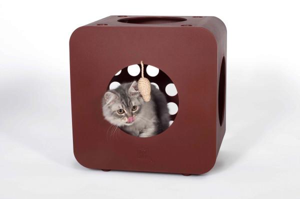 ARNI Says Kitty Kasa Recreation