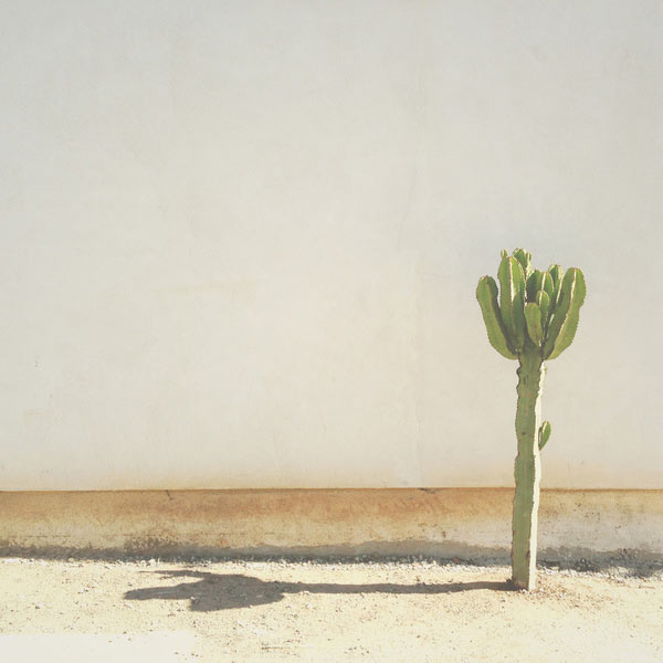 Fresh From The Dairy: Cactus in main art  Category