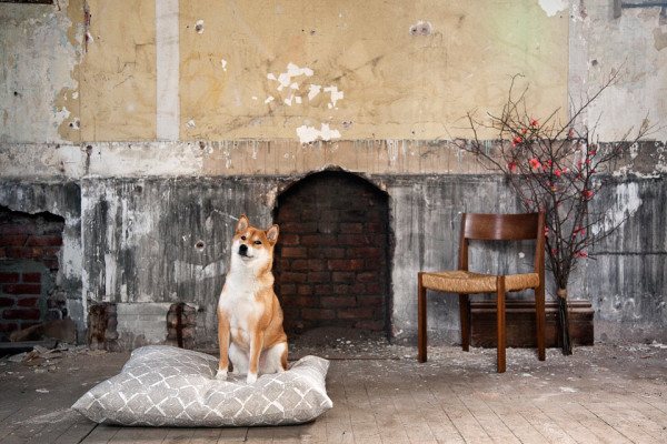 Where-I-Work-ZAK_and_FOX-0-dog