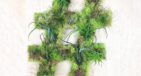 Plant Wall Art by Art We Heart