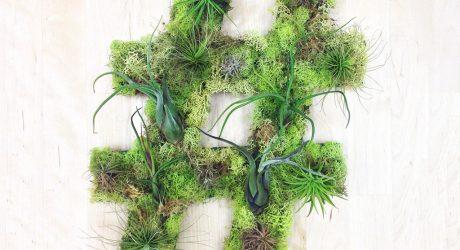 Plant Wall Art by Art We Heart