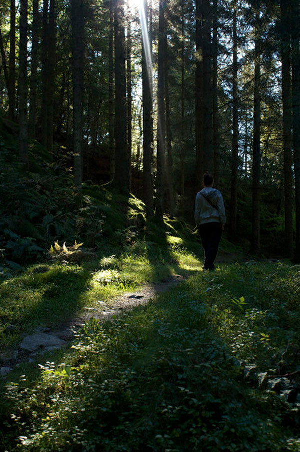 F5-Morten-Jonas-5-the-forest