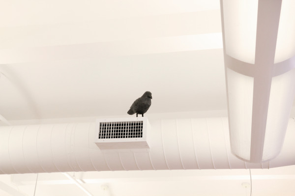 Where-I-Work-Alissia-Melka-Teichroew-byAMT-1-studio-bird