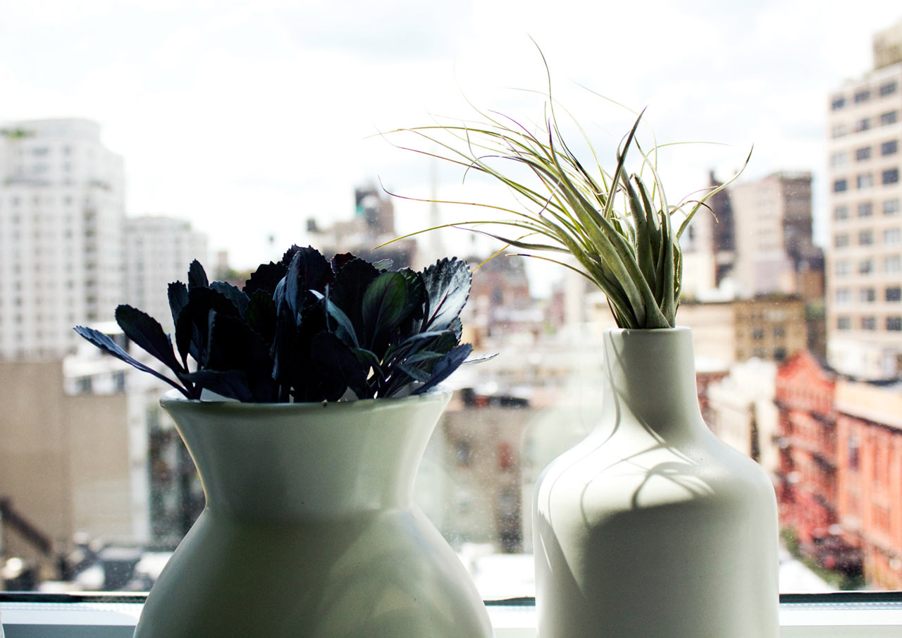 air-plants-windowsill