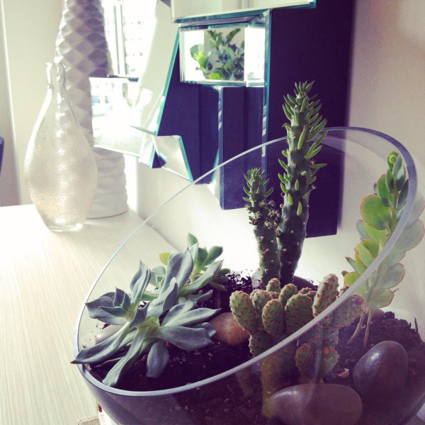 Tips and Tricks for Using Plants in Modern Interior Design +