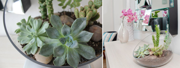 tips and tricks for using plants in modern interior design + plant