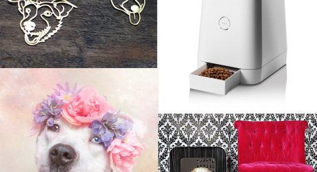 Dog Milk: Best of August 2014