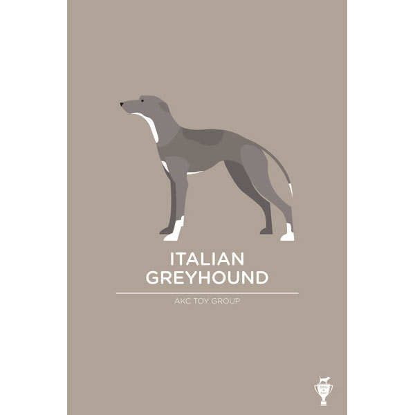 italian-greyhound-art-print