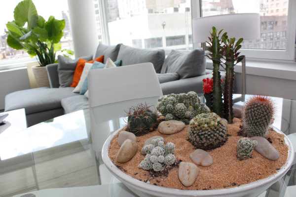 Modern Indoor Plant Ideas Cactus
