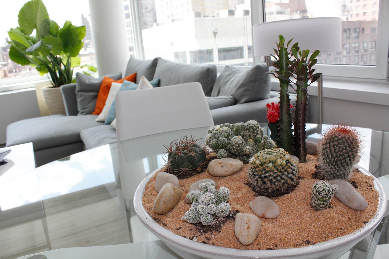 modern-indoor-plant-ideas-Cactus