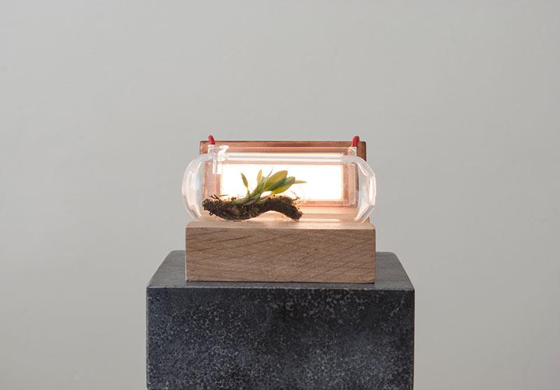 Sanctuaria: Where Design Meets Biology