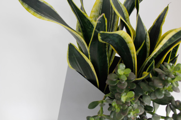 Tips and Tricks for Using Plants in Modern Interior Design + Plant Care Guide in main interior design  Category