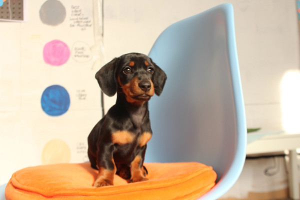 Where-I-Work-Rachel-Castle-3-sydney-sausage-dog