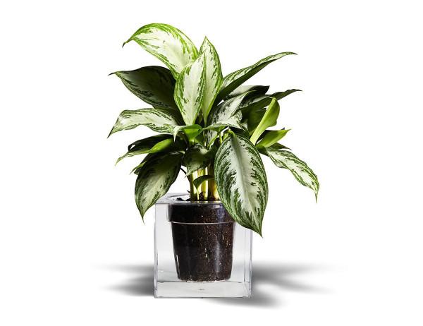 Gift-Guide-50-8-Boskke-cube-planter