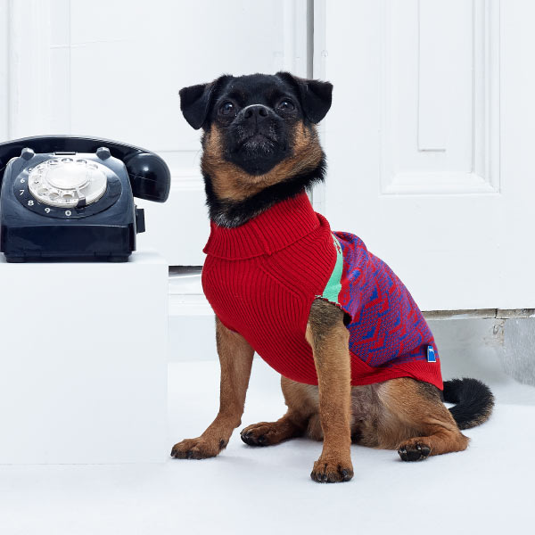 Gift-Guide-Dog-2-Pepito-dog-sweaters