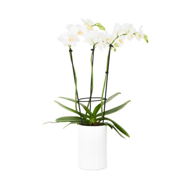 plastic pot orchid