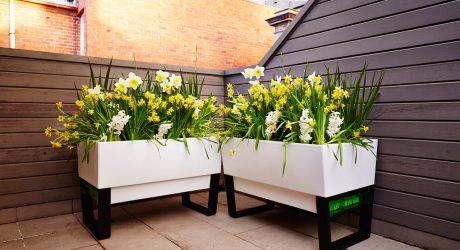 Glowpear: A Self-Watering Urban Garden