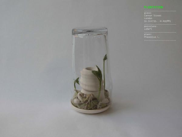 PLANTATION-Alicja-Patanowska-11