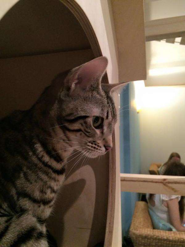 SPLINTR-MaisonDeMoggy-Cat-Cafe-1