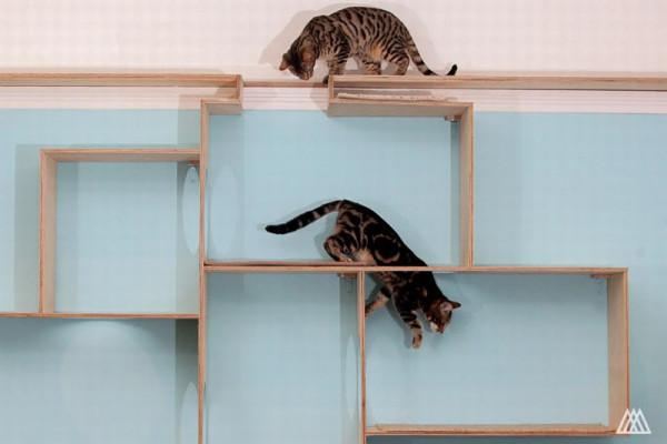 SPLINTR-MaisonDeMoggy-Cat-Cafe-10