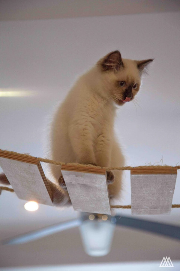 SPLINTR-MaisonDeMoggy-Cat-Cafe-2