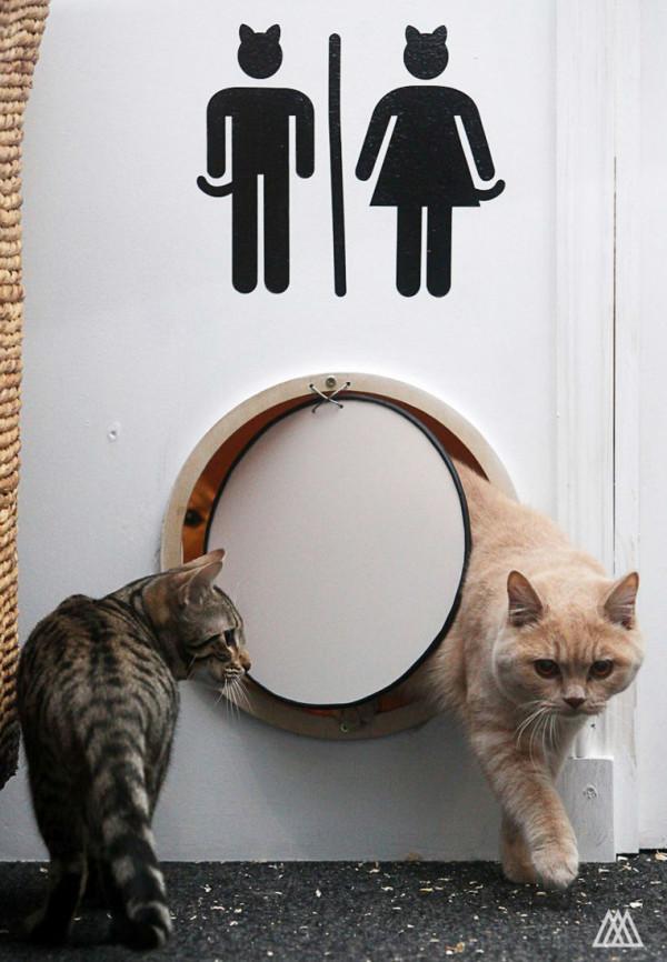 SPLINTR-MaisonDeMoggy-Cat-Cafe-3