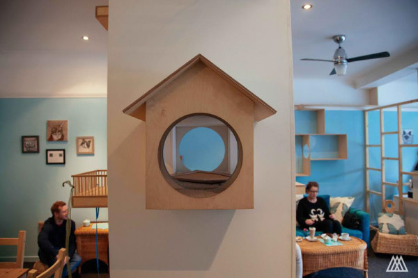 SPLINTR-MaisonDeMoggy-Cat-Cafe-4