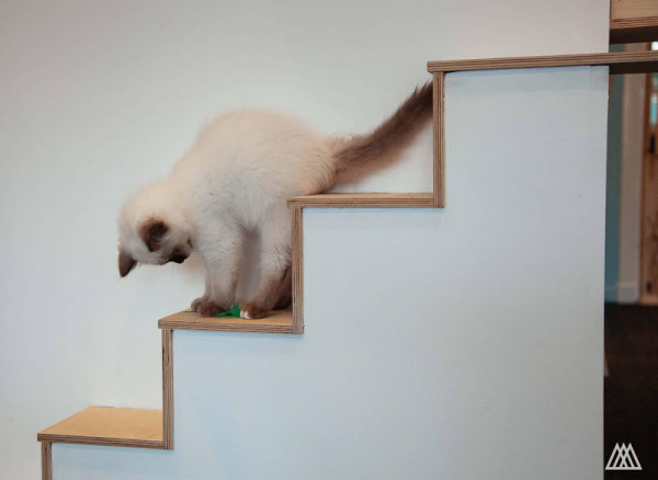SPLINTR-MaisonDeMoggy-Cat-Cafe-7