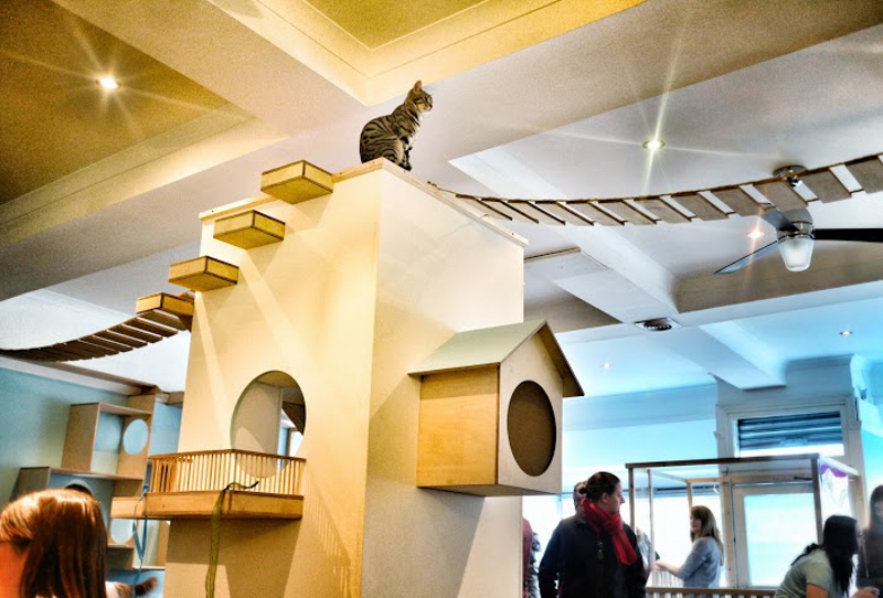 Maison de Moggy: Scotland\'s First Cat Cafe - Design Milk